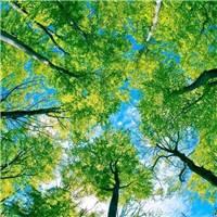 是时间教会了我,万事藏于心不表于情#唯美#风景#森系