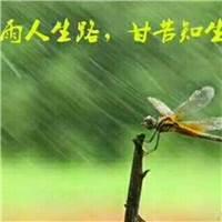 懂得珍惜才配拥有,在忙碌不要疏远那个心疼你的人#下雨#伤感#唯美