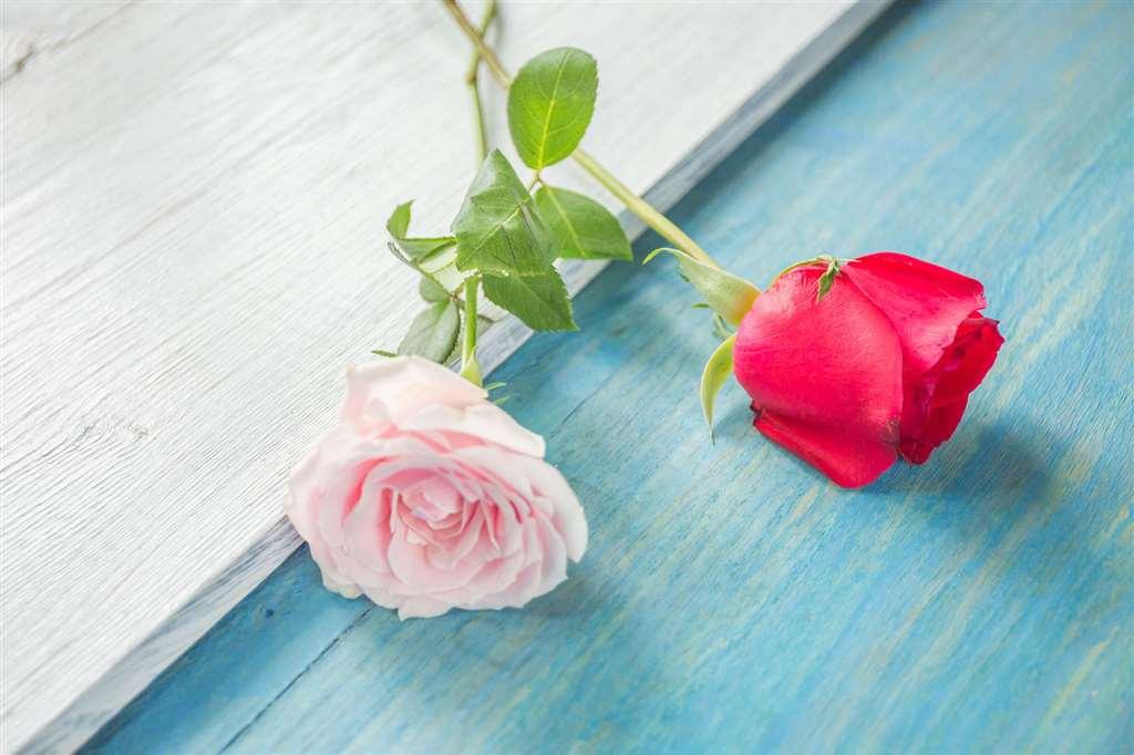 有一种心痛叫:你不懂我#花朵#唯美_配图大全